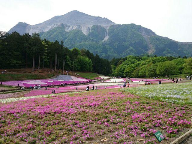 芝桜&武甲山1_羊山公園の芝桜