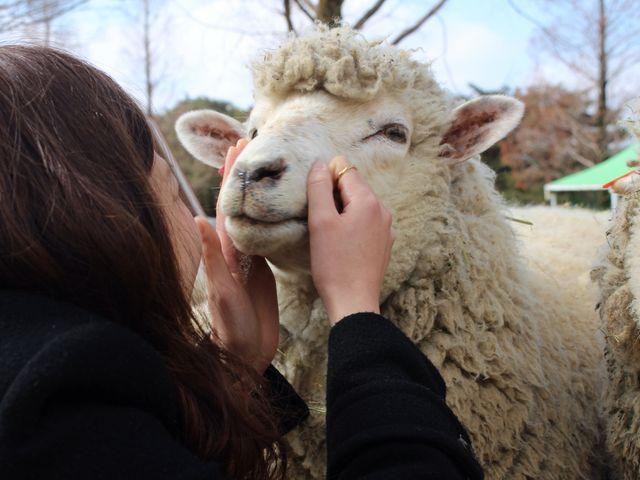彼女と羊_六甲山