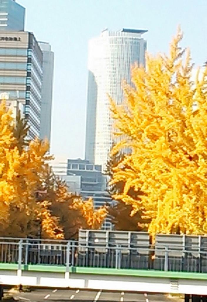 桜通りのいちょう並木