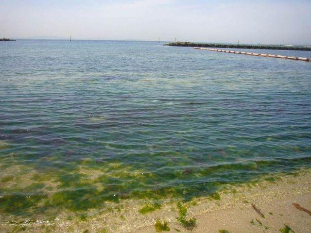 二色の浜潮干狩り場