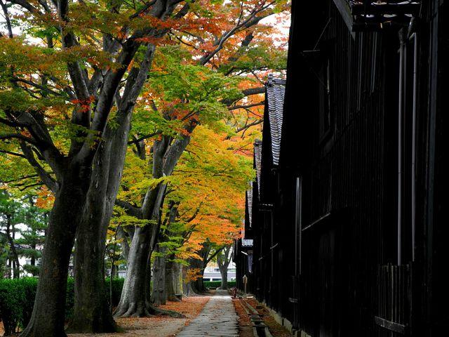 欅とモミジのコントラストが見事!_山居倉庫