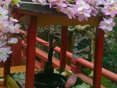 usaさんの寛永寺清水観音堂の投稿写真2