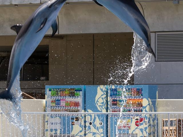 あそびーちで偶然撮れました_大分マリーンパレス水族館「うみたまご」