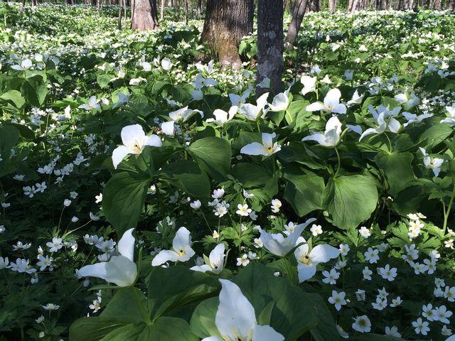 花、花、花、花、、、 歌が聞こえてくる感じでした_六花の森