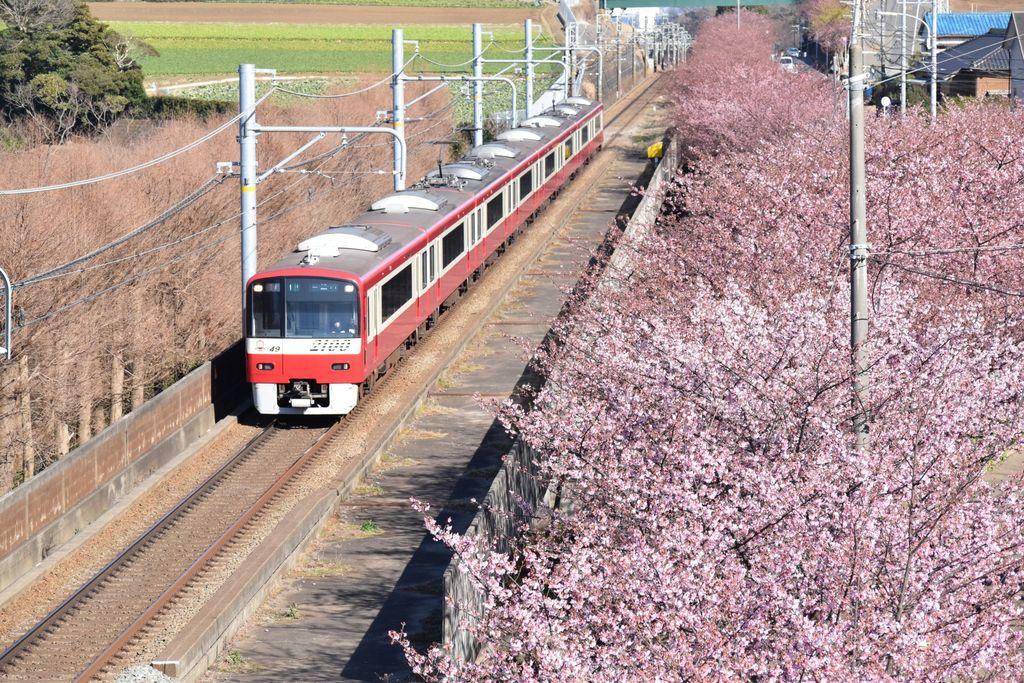 小松ケ池 【神奈川県】