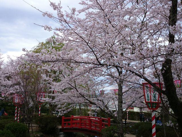 打吹公園の桜・ツツジ】アクセス...