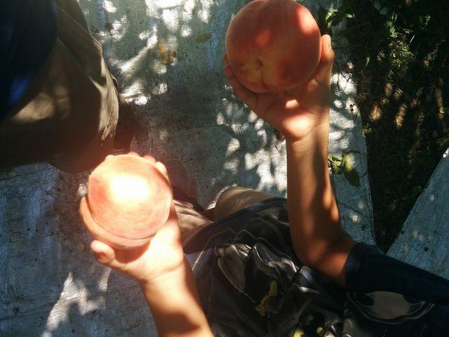 大きな桃でした_小野洋らん果樹園