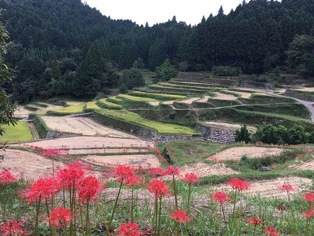 すでに稲刈りが終わっていました。_つづら棚田