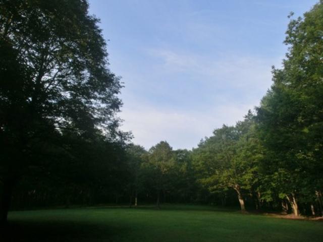 朝_月見野森林公園キャンプ場