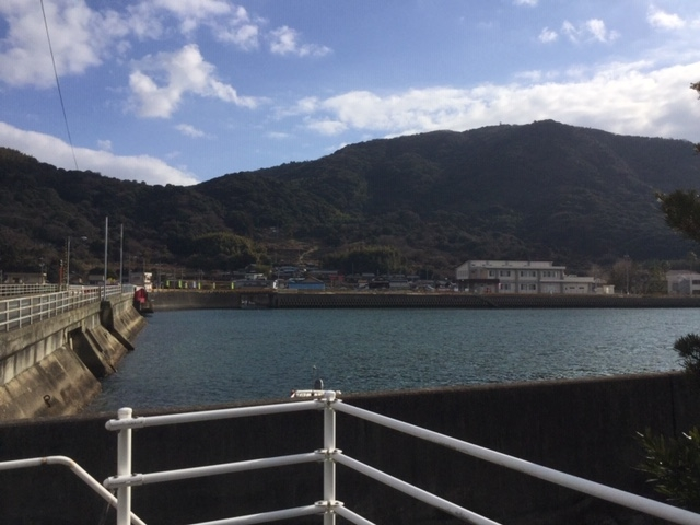 錦橋から見た錦山      (4月に山桜が咲きます)_向島