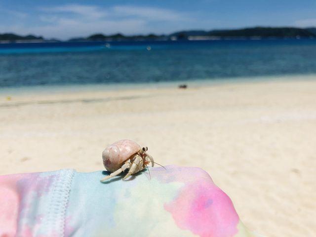 ピンクのヤドカリ発見_ニシバマビーチ