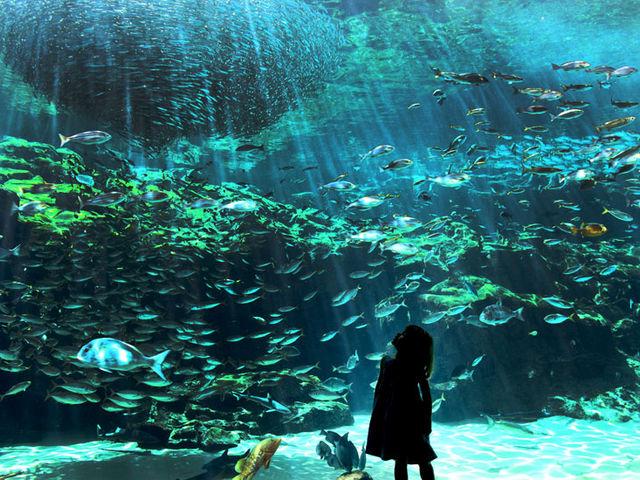 九十九島湾大水槽は、自然光がふりそそぐ屋外型の水槽です。_九十九島パールシーリゾート
