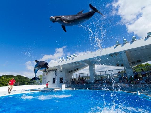 海きららは、九十九島の海を生きものを紹介した水族館です。_九十九島パールシーリゾート