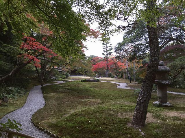 苔も美しい庭園_吉城園