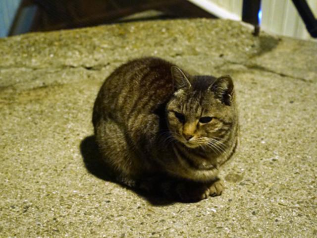 地元の猫さんにご挨拶_尾道