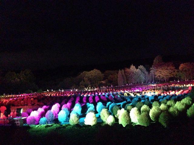 ライトアップされたコキア(秋)_国営みちのく杜の湖畔公園