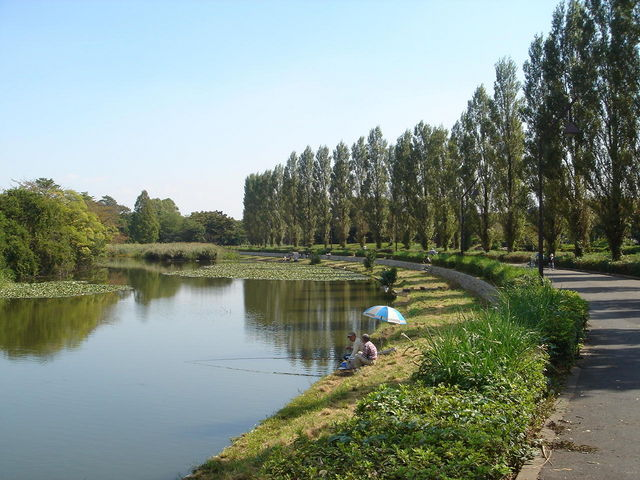 「水元公園 池」の画像検索結果