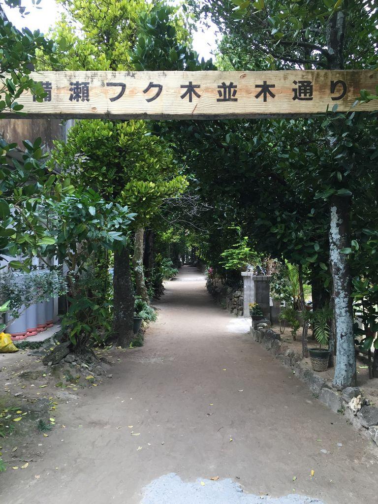 備瀬のフク木並木