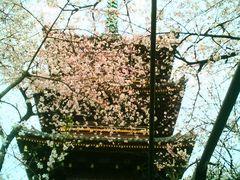 usaさんの旧寛永寺五重塔の投稿写真1