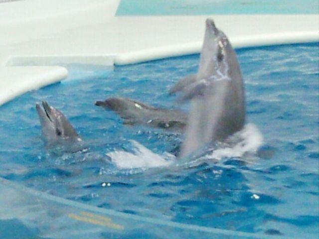 イルカのショー_いおワールドかごしま水族館