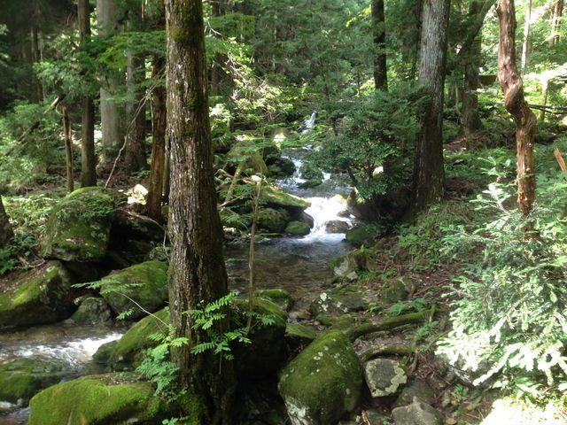 苔の川_21世紀の森公園