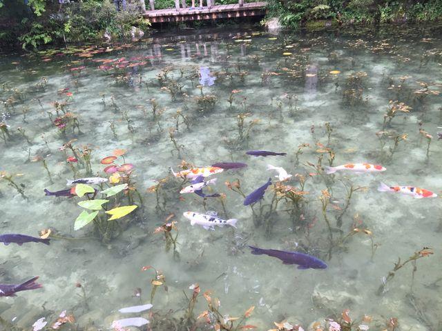モネの池_板取川