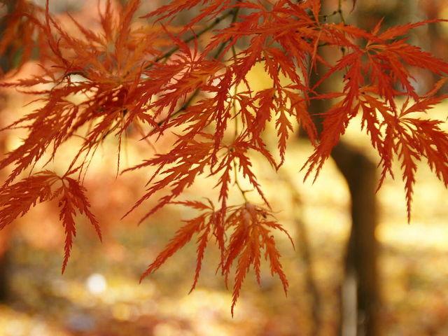 紅葉の時期はイチョウ中心に色付く木々を数多く楽しめます。_中島公園