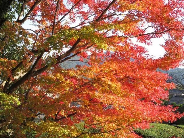紅葉を見て散策して、いやされました。_瑠璃光寺