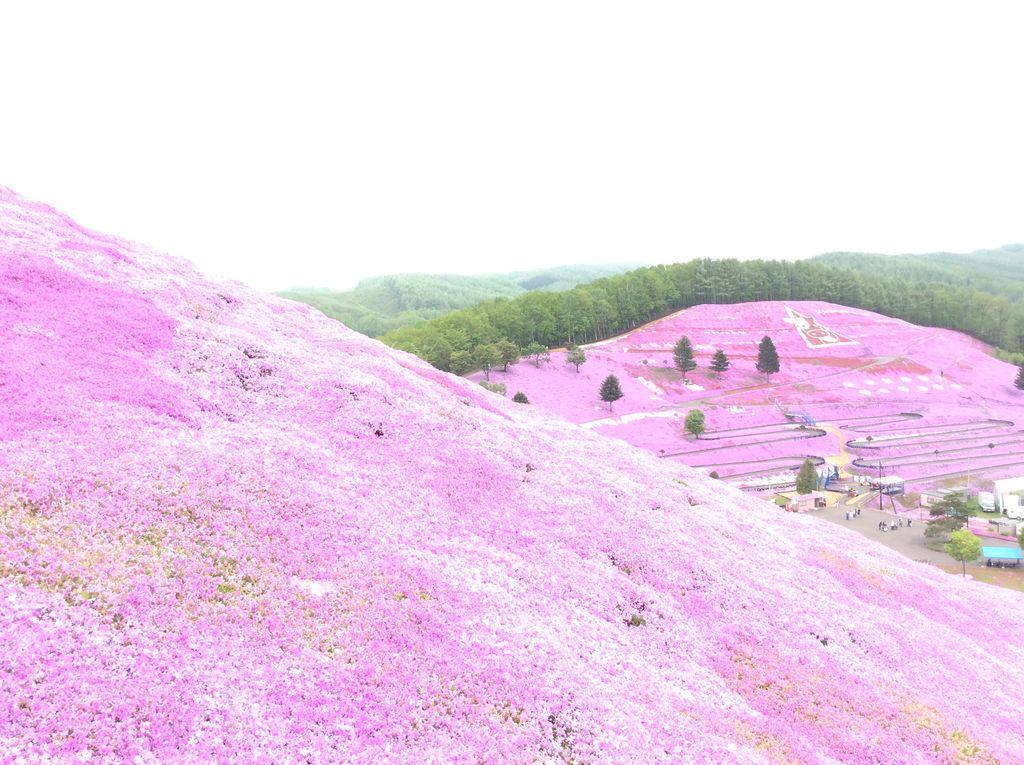 ひがしもこと芝桜公園の芝桜