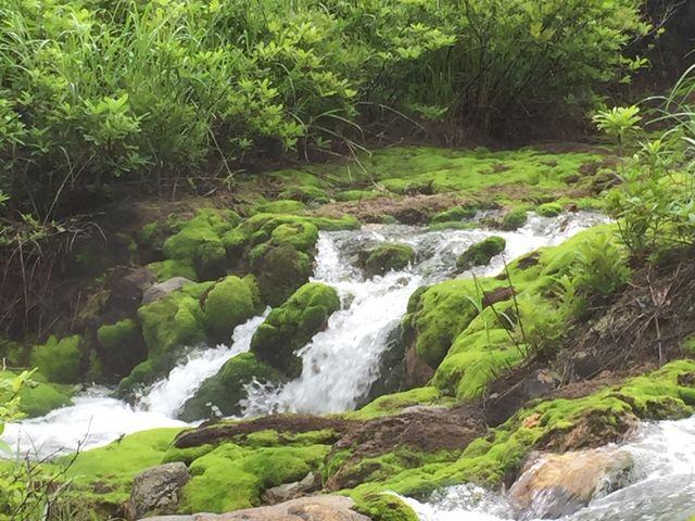 緑がとても美しい_チャツボミゴケ公園