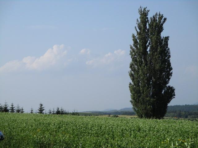 立派な木ですね~_ケンとメリーの木