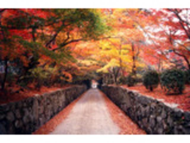 きれい_興聖寺の琴坂