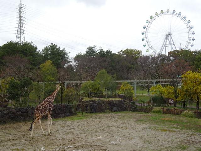 キリンのそばには遊園地の名残が_到津の森公園