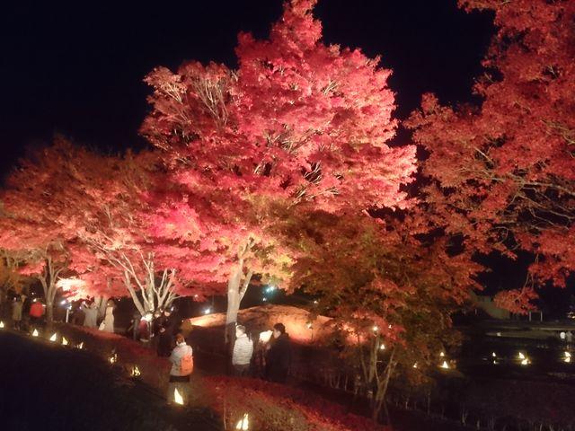 夜のもみじ回廊は鮮やかな赤_富士河口湖温泉郷