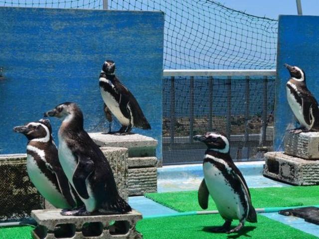 ペンギンも海を見つめ_寺泊水族博物館