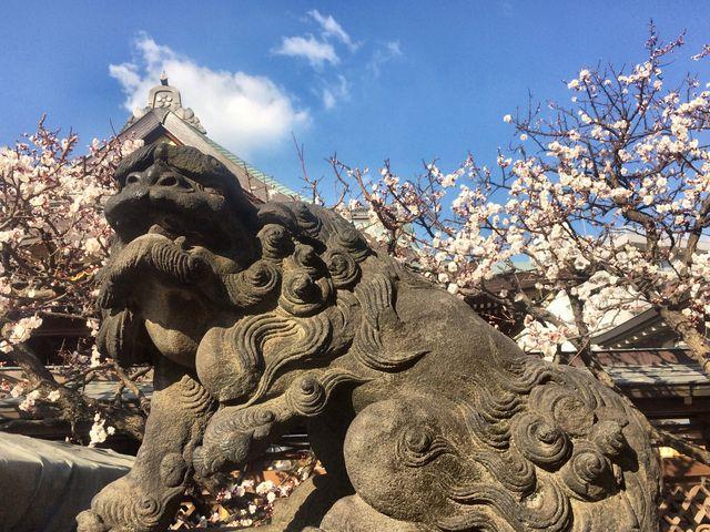 狛犬と梅_湯島天満宮
