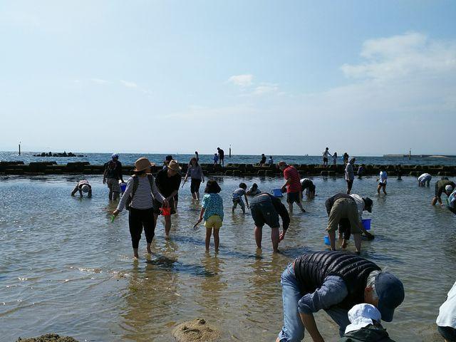 潮干狩りシーズンには家族連れでにぎわいます。_二色の浜潮干狩り場