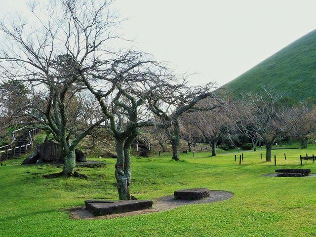 35種3000本の桜が_大室山