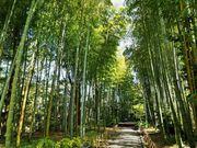 竹林の中央に 竹製の大きな円型のベンチが有ります_竹林の小径