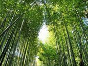 竹林の小径_竹林の小径