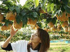 園 中村 観光 果樹