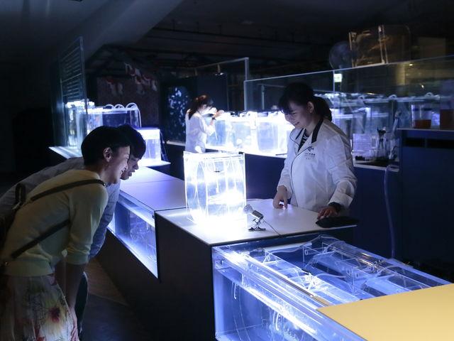 「アクアベース ラボ」では、クラゲの赤ちゃんを育てる飼育スタッフとのふれあいも_すみだ水族館