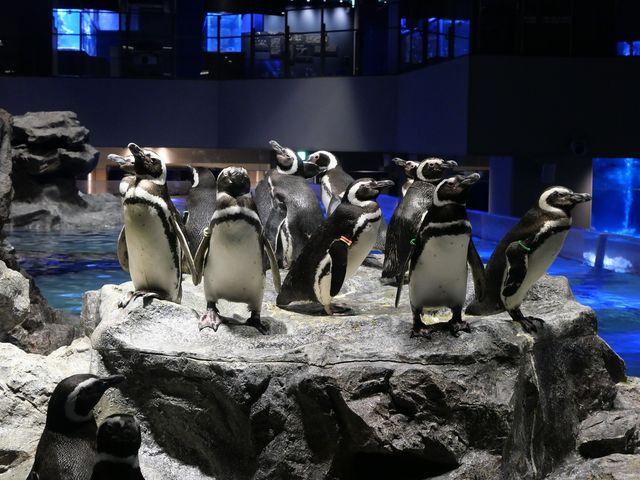 国内最大級の屋内開放型プールにはペンギンが間近に♪_すみだ水族館