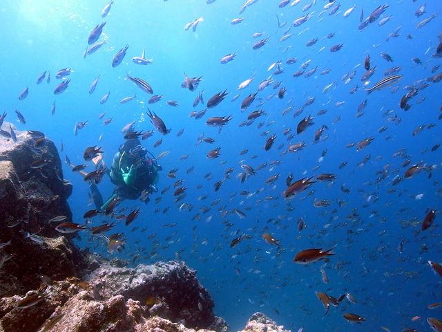 青海島の豊かな自然_青海島ダイビングセンター